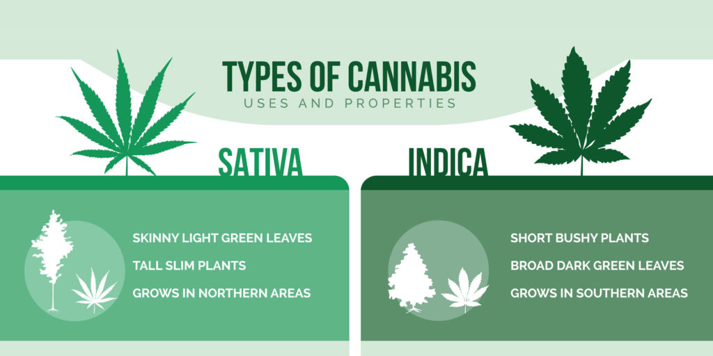 Indica vs Sativa Blog post from ExpressMarijuanacard.com