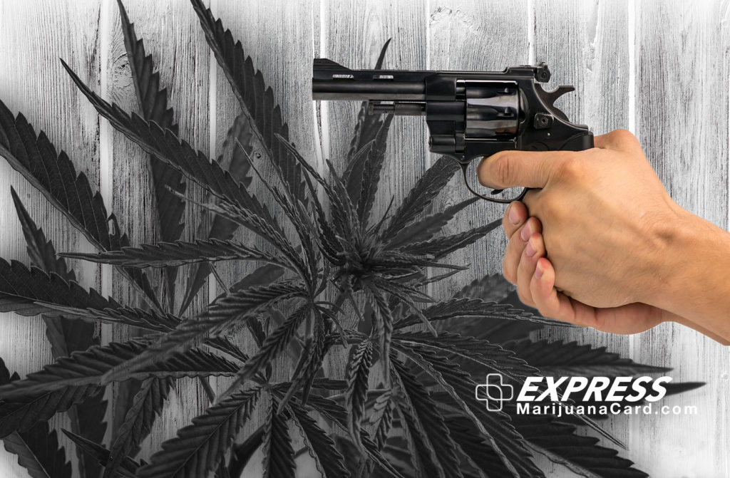 Image of a person holding a firearm with a background of medical marijuana