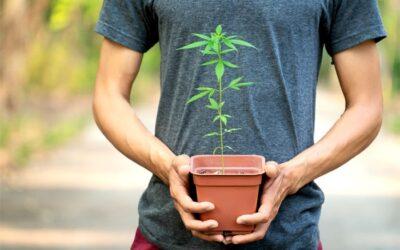 Common Misconceptions About Marijuana